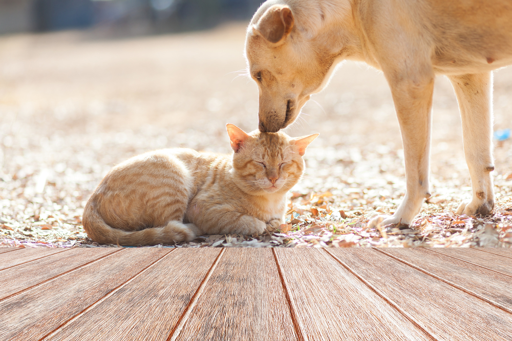 5 Veterinary Services You Never Knew Existed