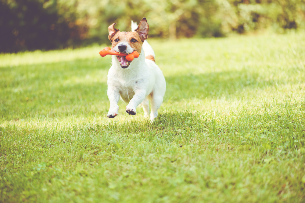 How Veterinary Oncology Helps Animals and Humans Alike