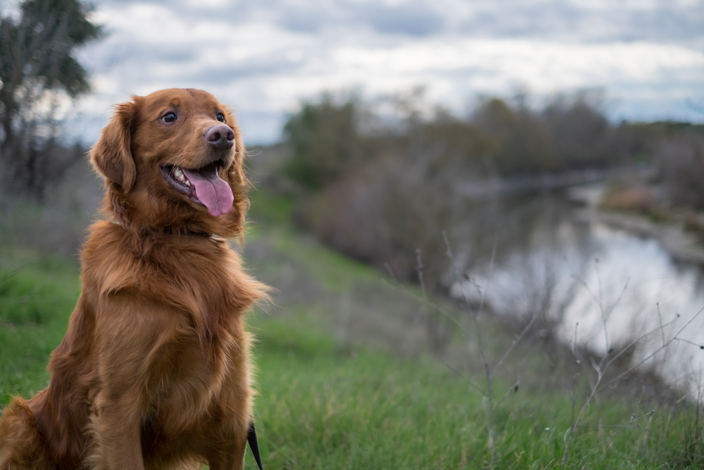 Need to Know: Early Warning Signs of Cancer in Dogs