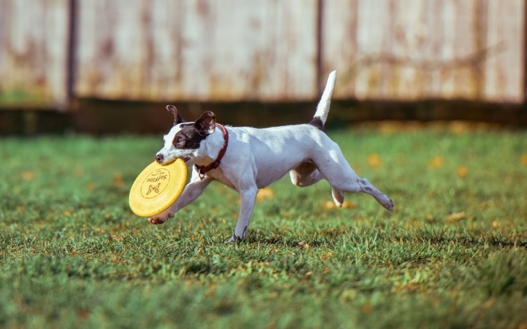 5 Ways to Keep Your Pet Happy and Healthy