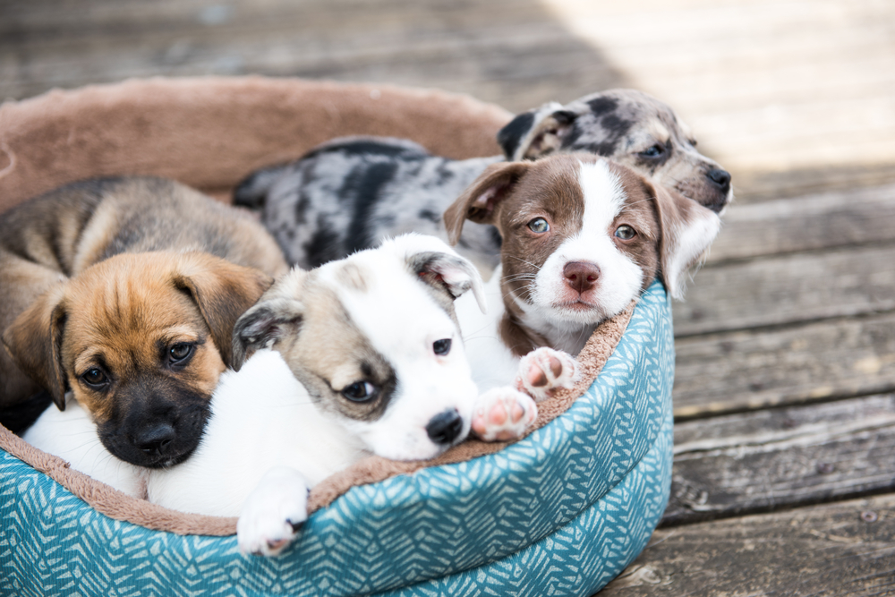 3 Key Considerations to Think About Before Adopting A Pet