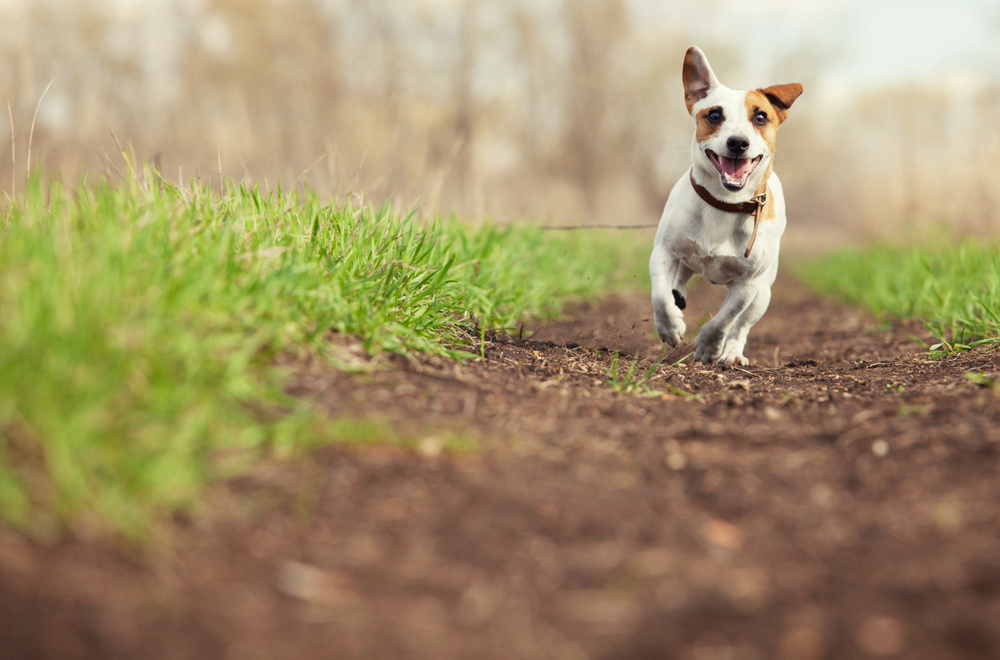 5 Safety Tips For Taking Dogs on an Outdoor Adventure This Summer