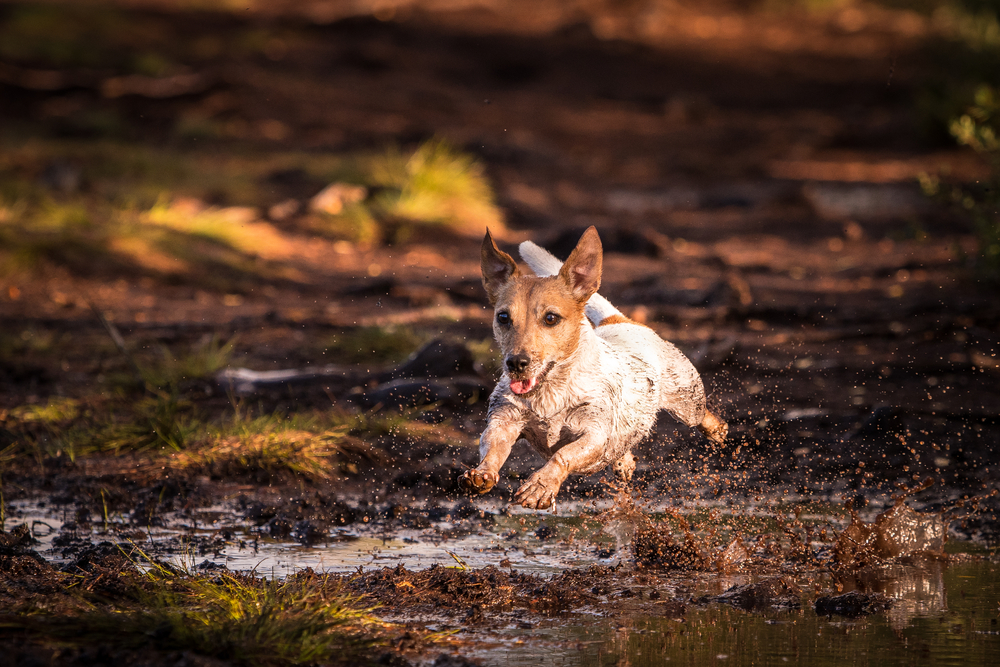 Pima County Leptospirosis Cases Are On The Rise. Here's How You Can Protect Your Pets