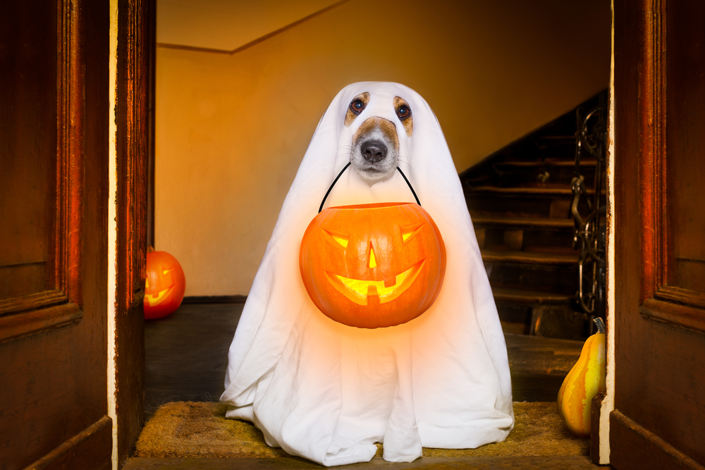 Protect Your Pets: Keep Halloween Candy and Costumes Out of Reach