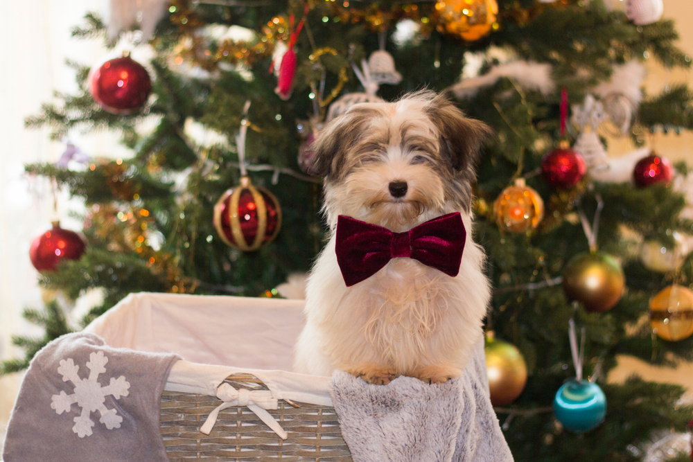 Festive Housekeeping: Making Sure Your Pets Are Safe During the Holidays