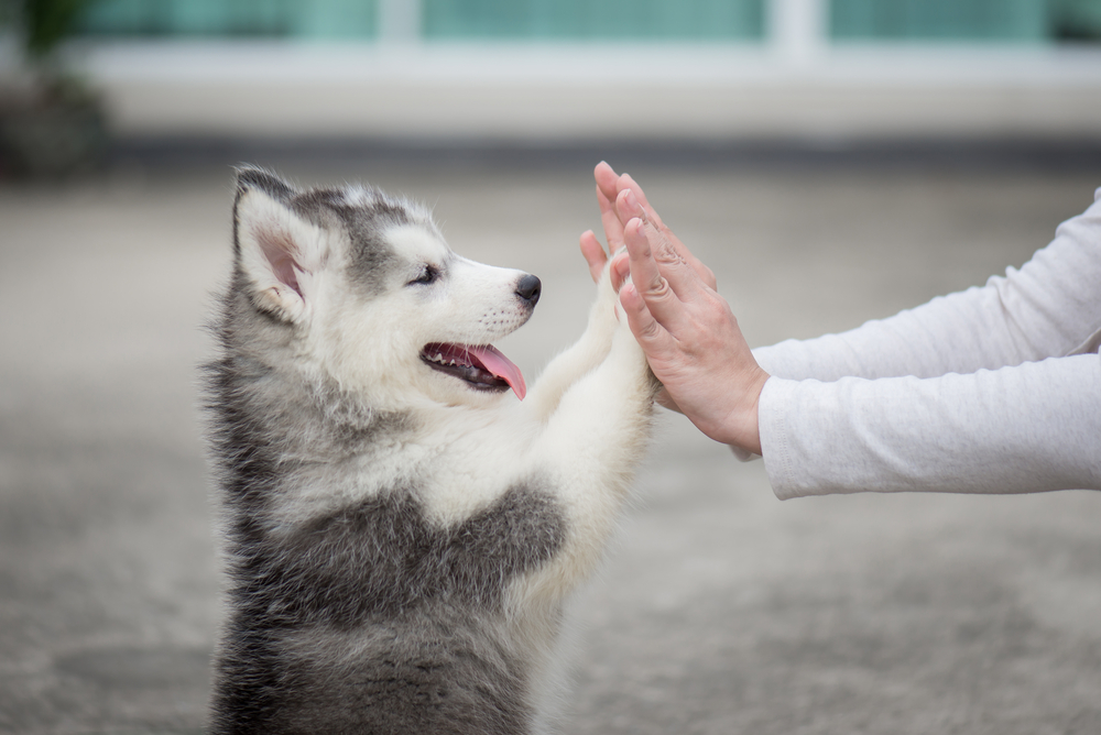 5 Ways to Show Your Pet Love