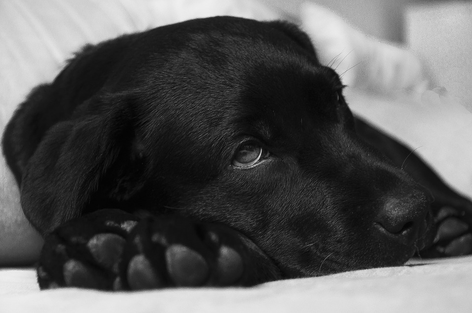 5 Warning Signs of a Veterinary Emergency