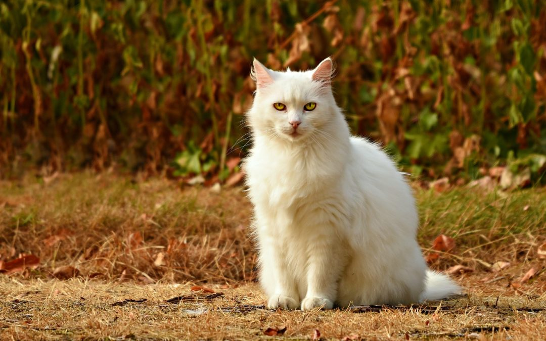 From Fat Cat to Cool Cat: Tips for Cat Weight Loss