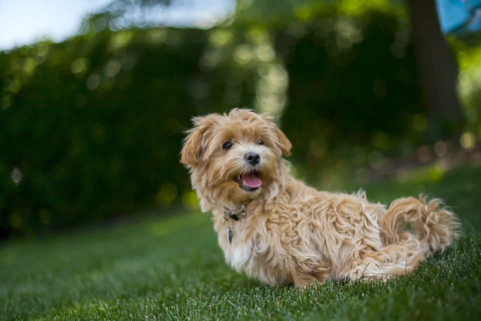 How to Care for Your Pets This Summer