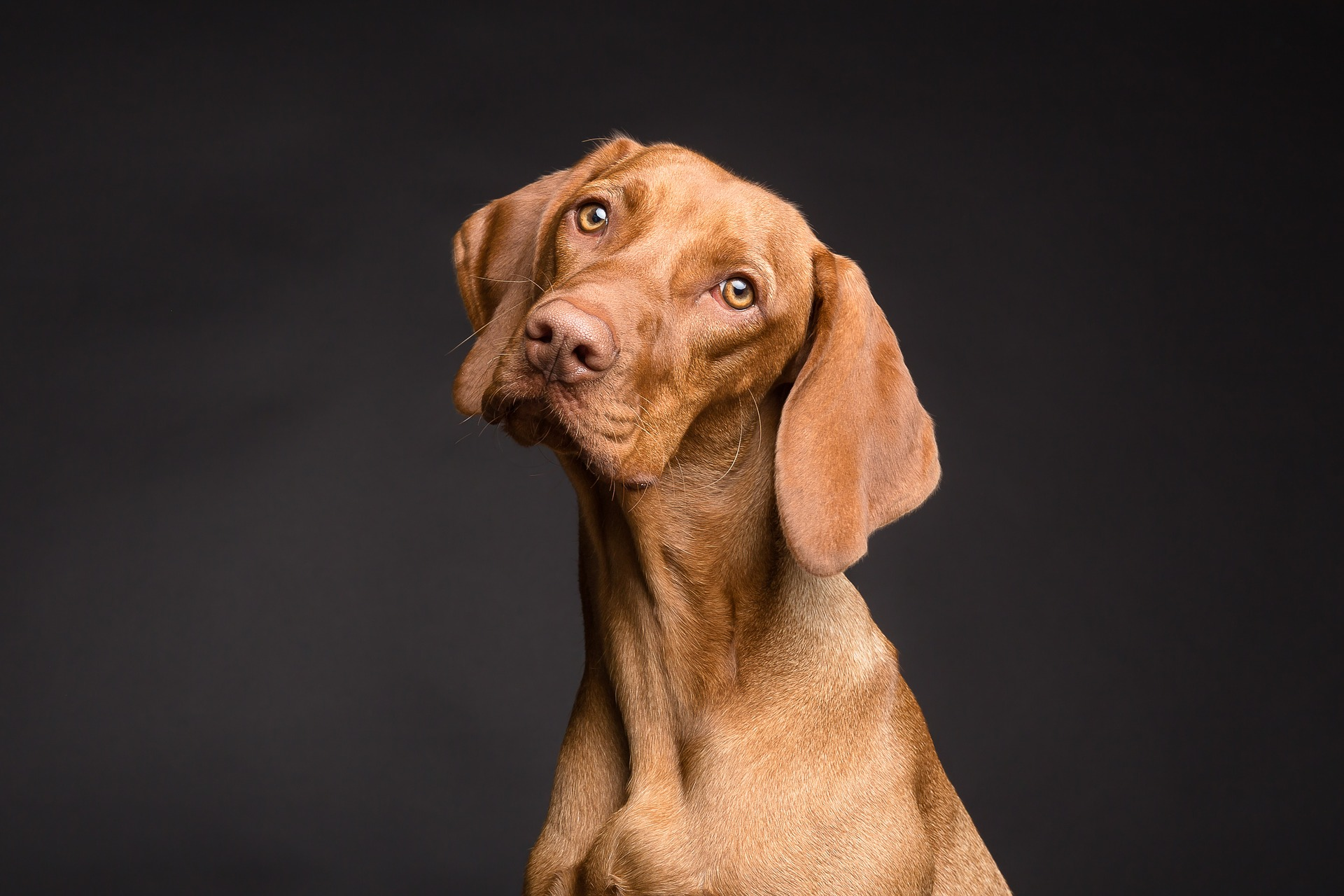 Lipomas and Lumps on Dogs: Symptoms and Diagnosis | Southern