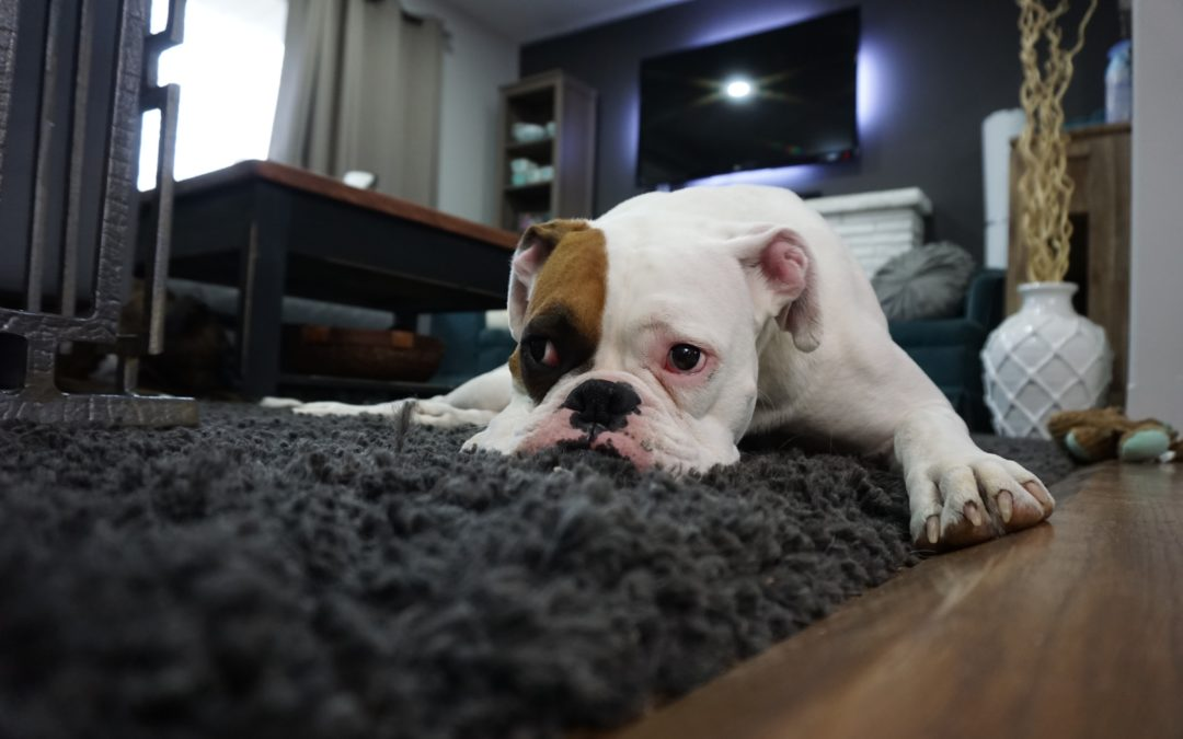 How To Deal With Your Pet's Separation Anxiety