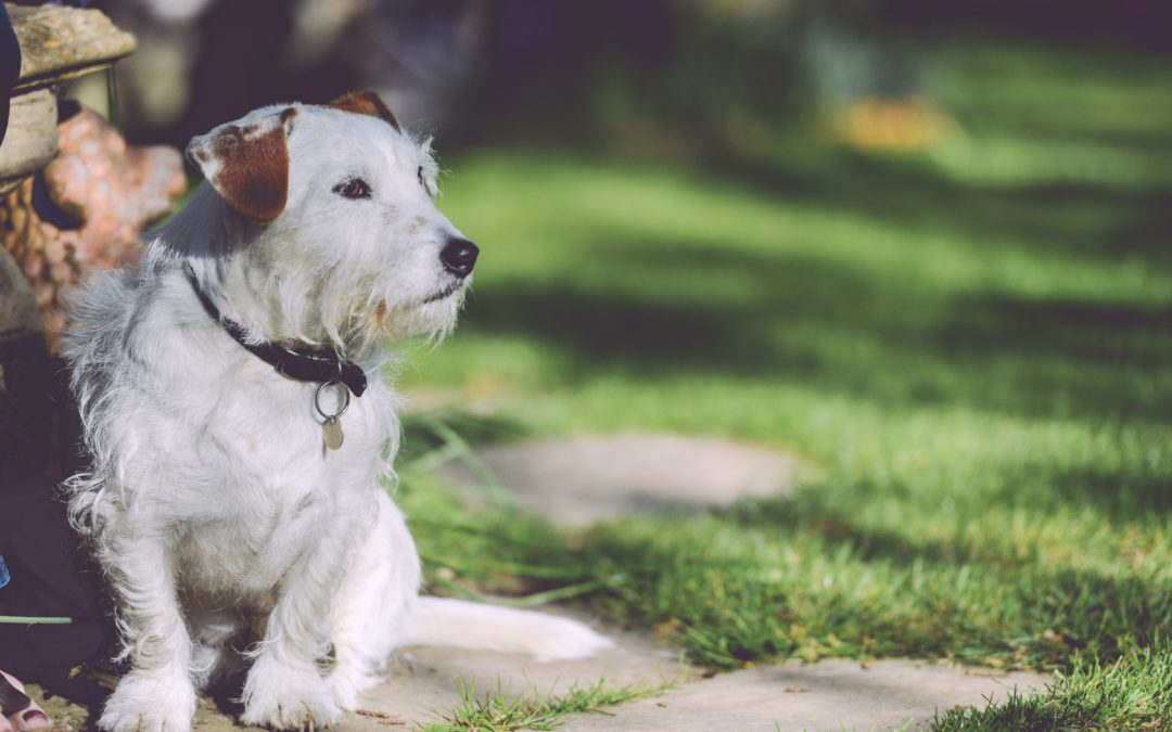 Tips On How to Manage Your Pet's Allergies