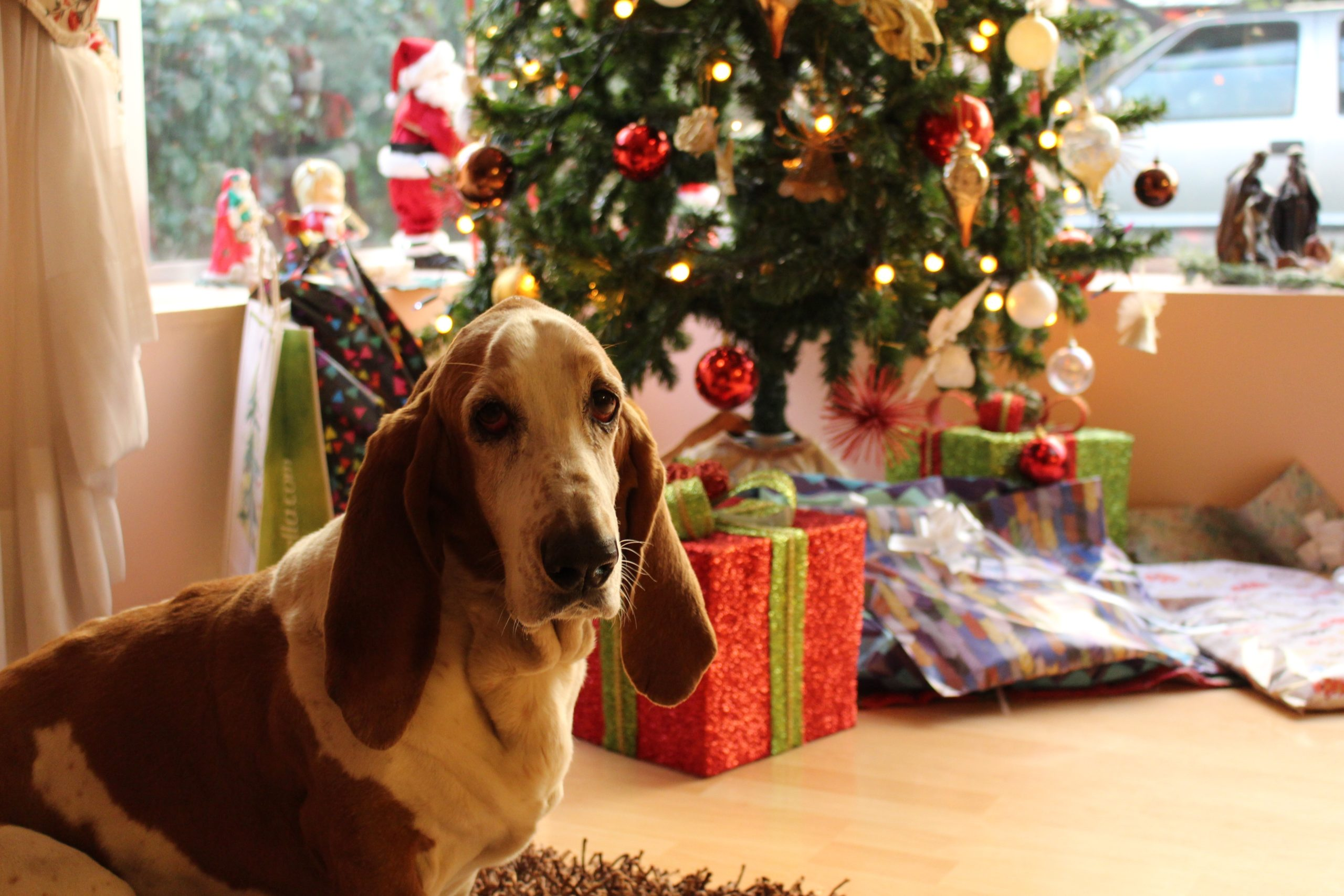 Pet Gifts, Decorations, and Plants: How To Plan A Pet-Safe Christmas