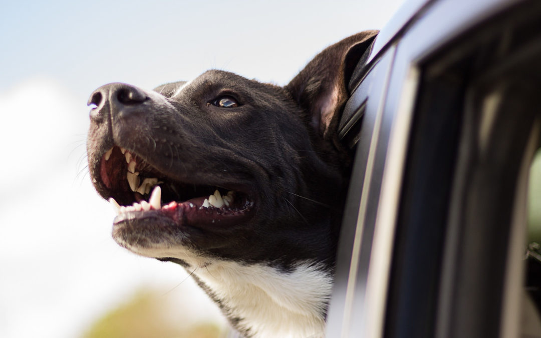 Traveling With Pets: Tips and Tricks