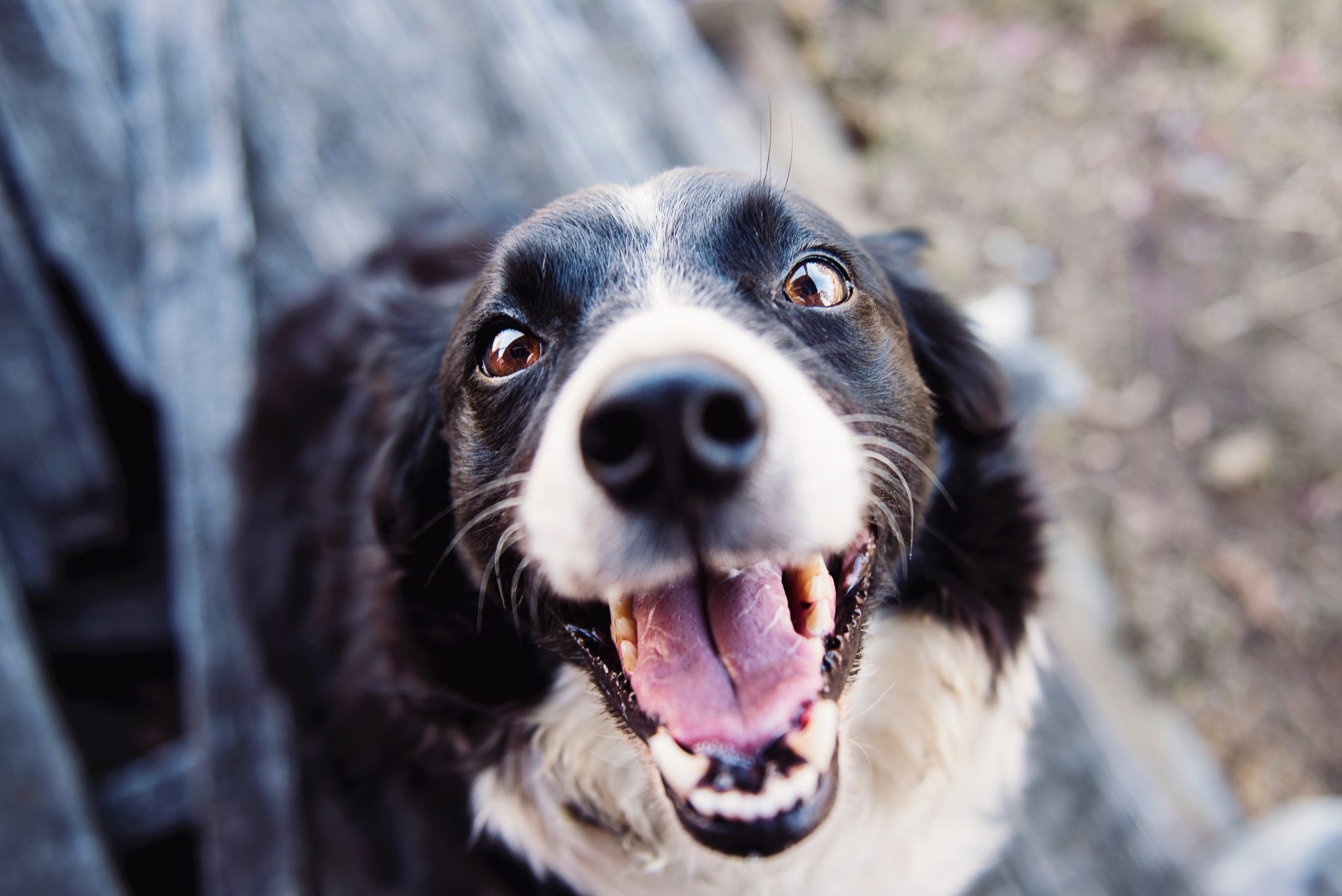 National Pet Dental Health Month: How To Take Care Of Your Pet's Teeth