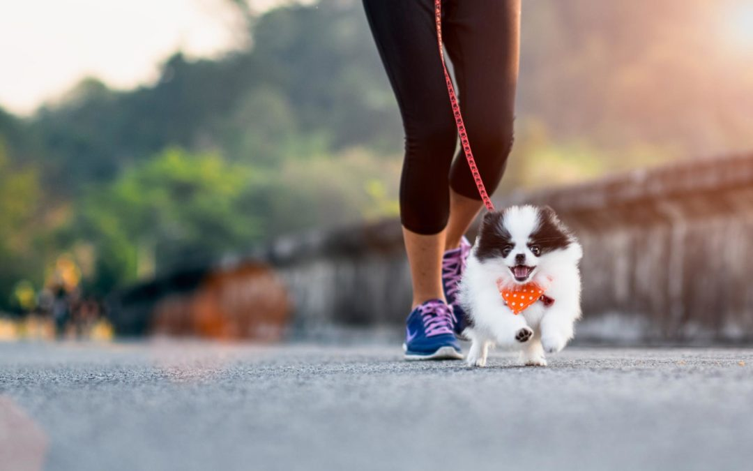 Dog Exercise: How Much Exercise Does My Dog Need?