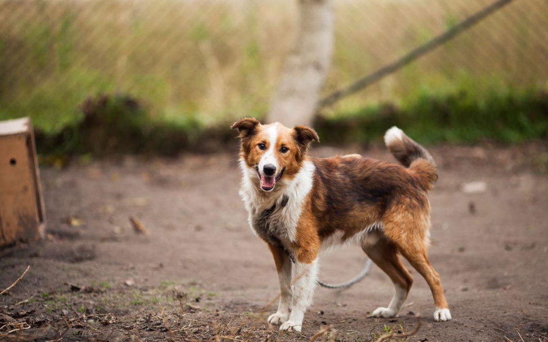 Avoid These 5 Microchip Mistakes With Your Pet