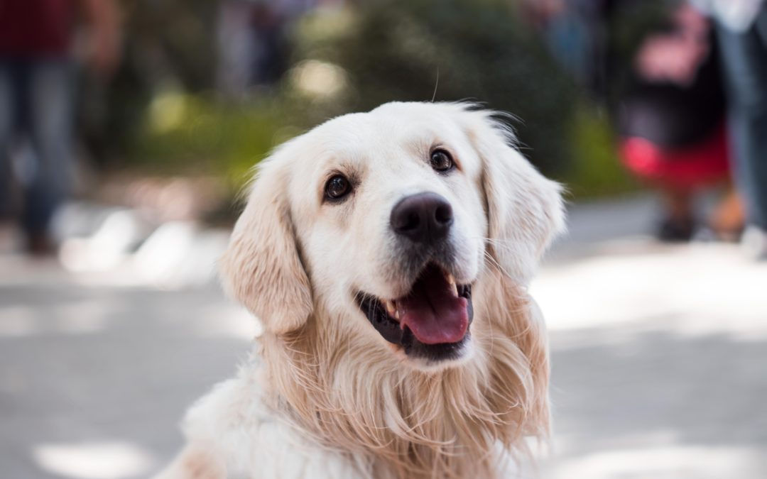 The Importance Of Pet Health Insurance