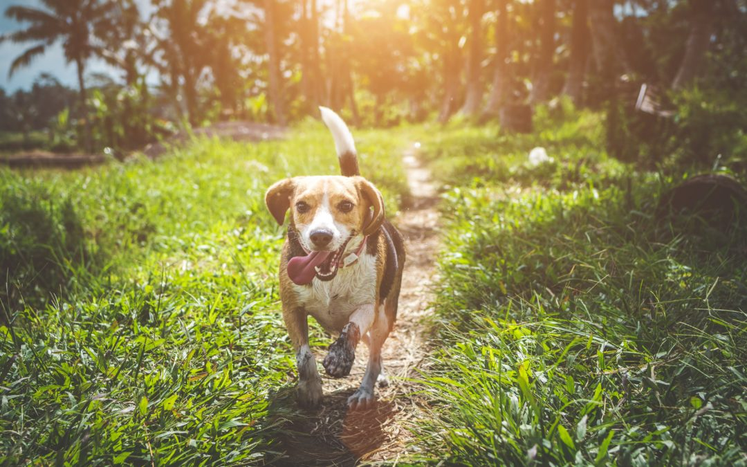 May Is Chip Your Pet Month: Why Microchipping Your Dog or Cat Is Important