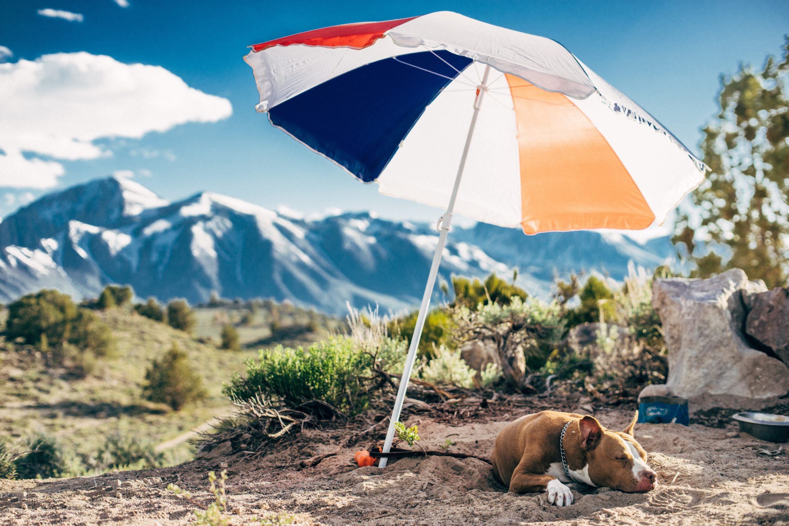 Summer Pet Safety: How to Prepare Your Pets for Hot Weather