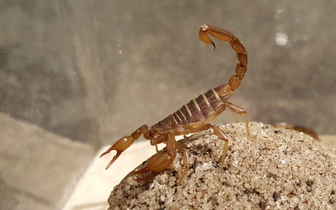 What to Do if Your Dog Is Stung by A Scorpion