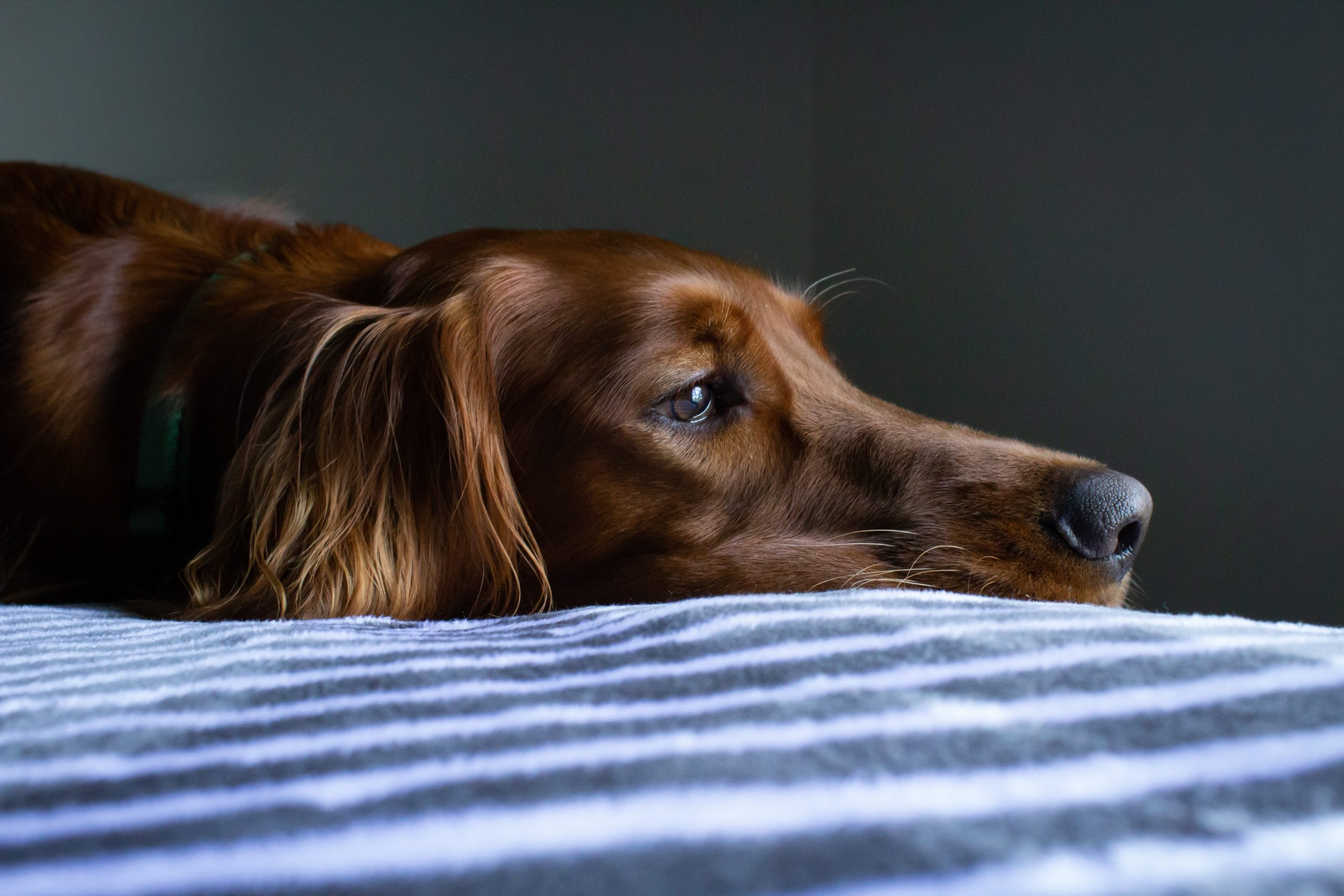 Great Tips For Keeping Your Pet Cool at Night
