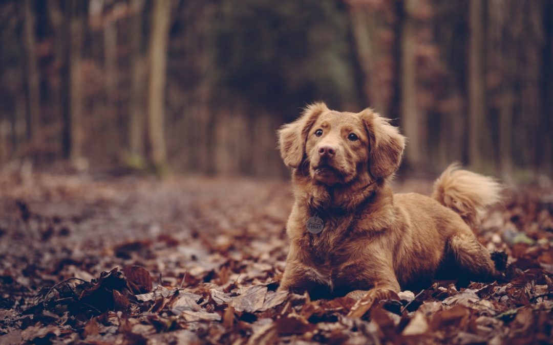 3 Delicious Thanksgiving Foods You Can Make for Your Dog