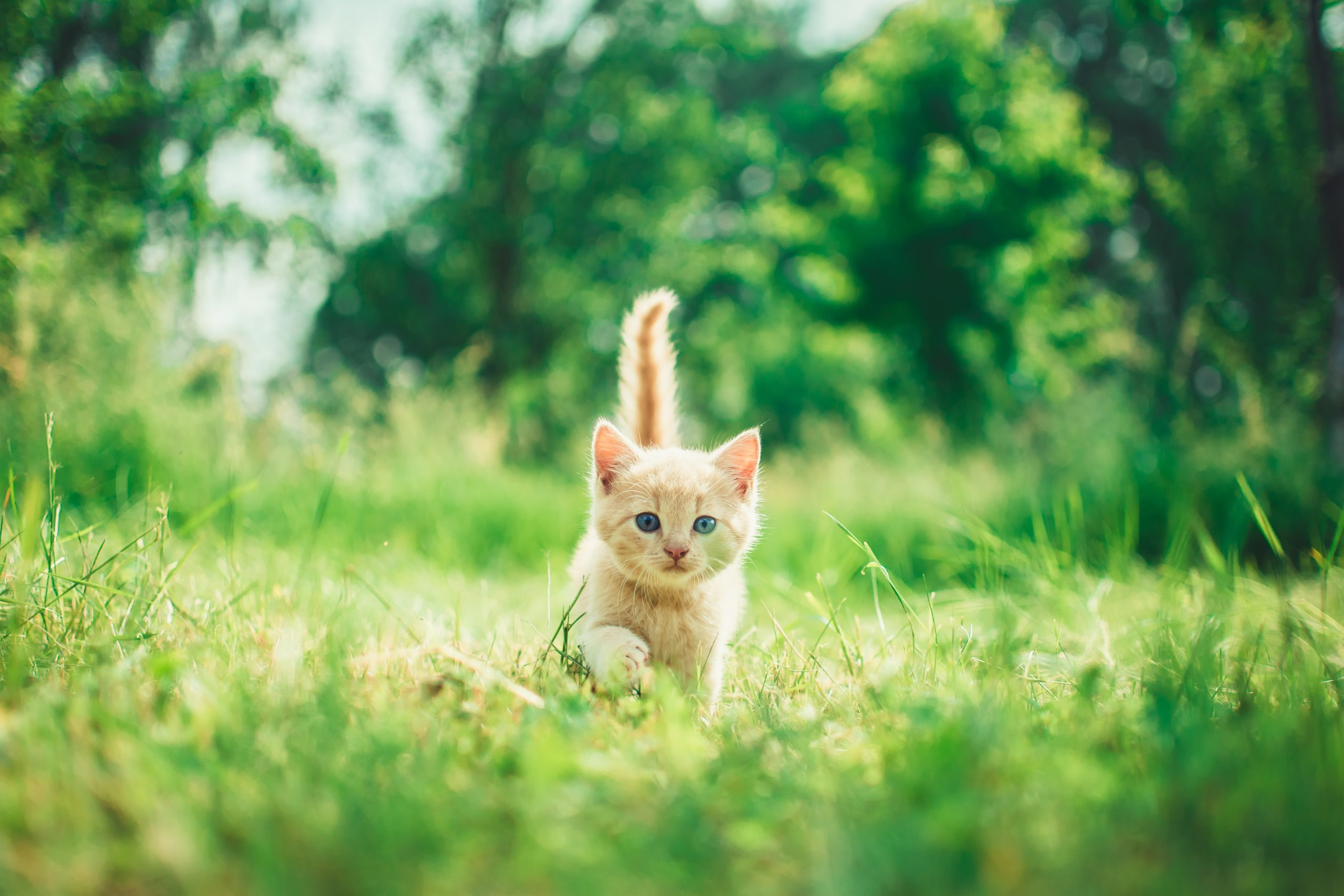 February National Cat Health Month: Tips to Promote Health in Cats