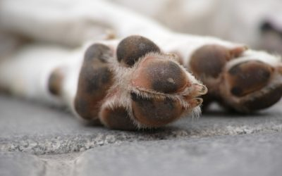 A Few Simple Tips to Protect Your Pet's Paws in Winter