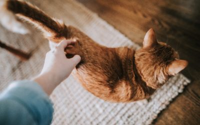 What Your Cat Is Trying to Tell You With Its Tail