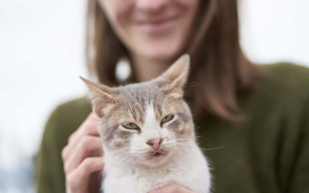 Cats Make Great Pets, Science Finds