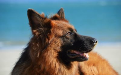 How to Stay on Top of Your Pet's Health In Summer
