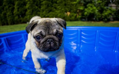 4 Tips to Keep Your Pet Safe This Summer