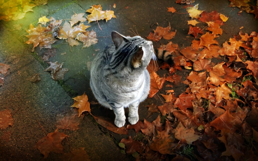 How to Have a Safe Thanksgiving with Your Pets