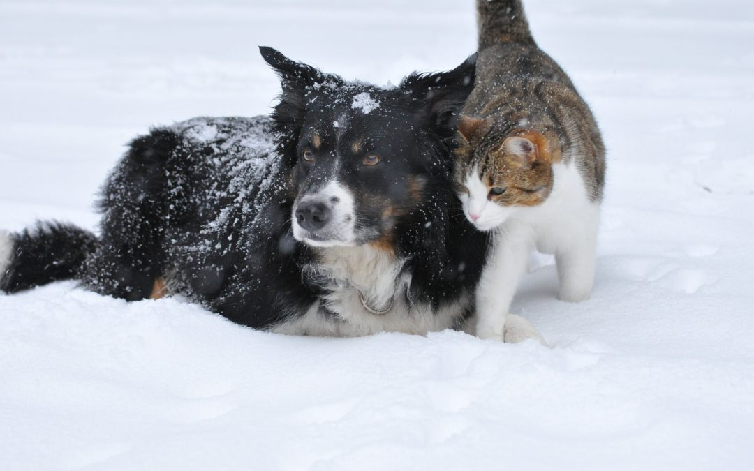 4 Ways to Introduce a Dog to Your Cat