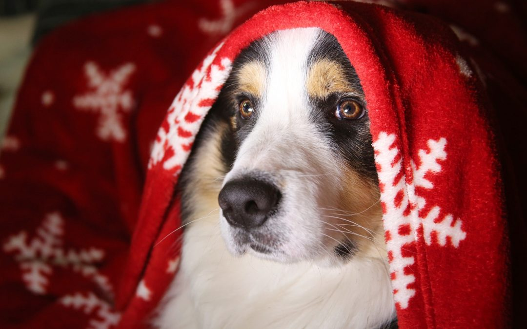 Tips for Reducing Holiday Pet Stress