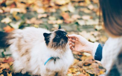 Keeping Your Pet Happy And Healthy In The New Year