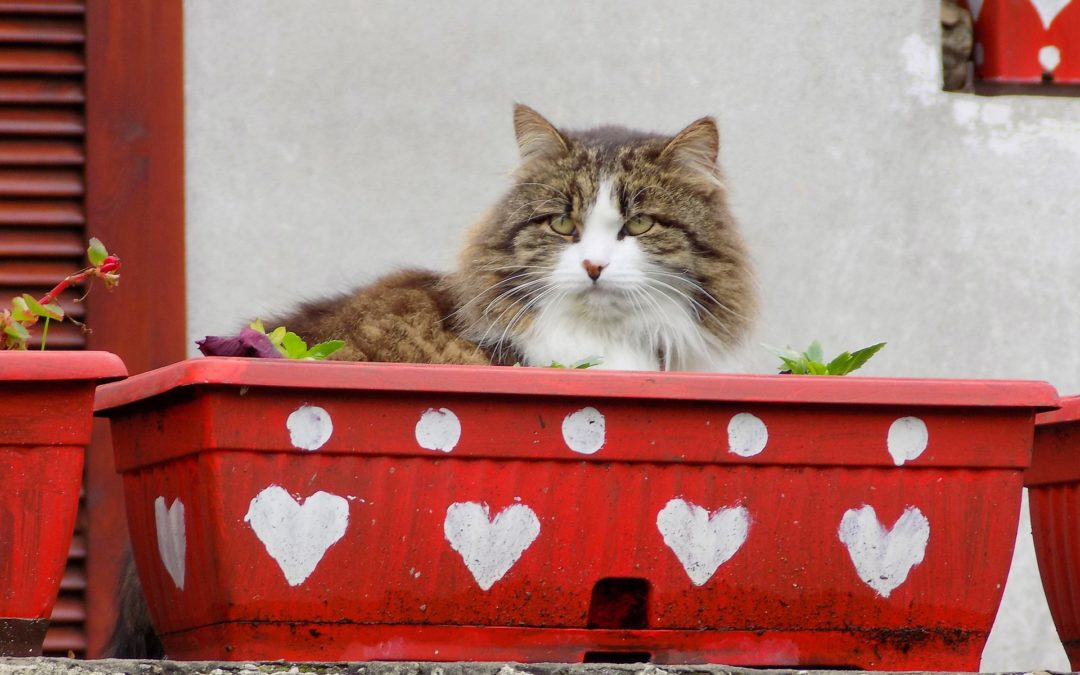 Valentine's Day Gifts and Treats for Your Pet