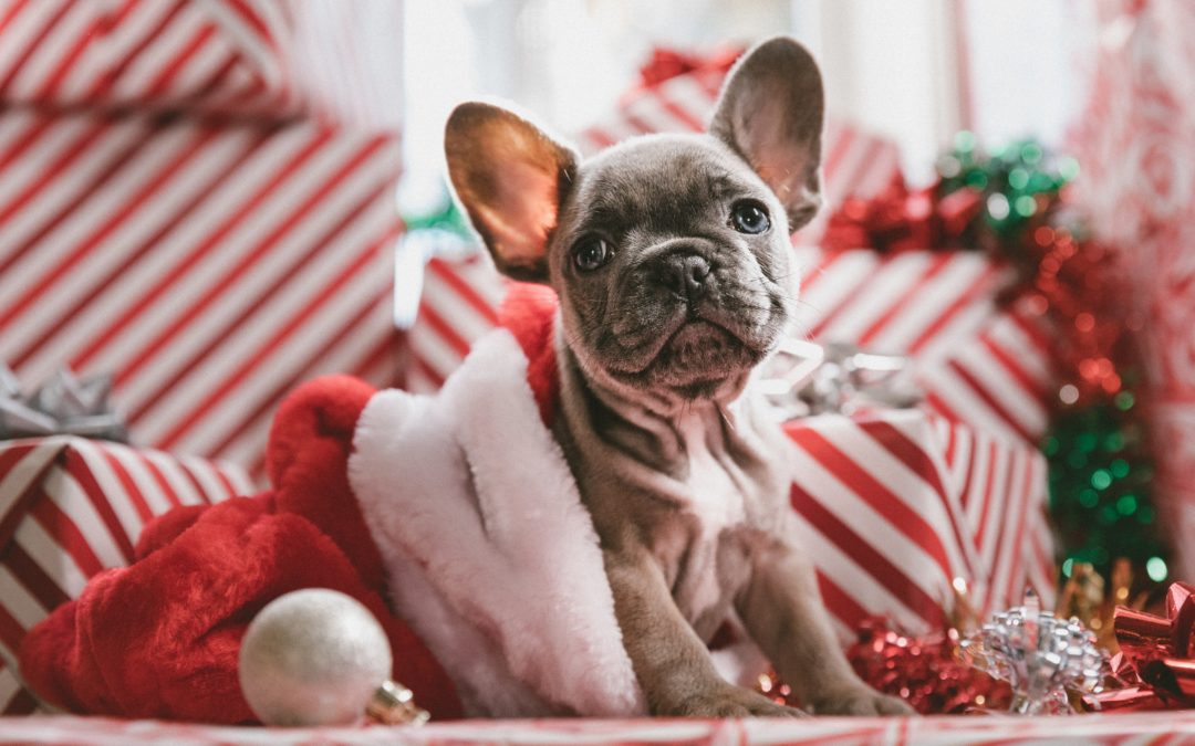 Last Minute Health & Wellness Gifts for Dogs