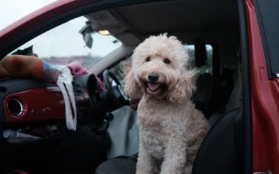 How to Make Sure Your Pet Travel is Safe