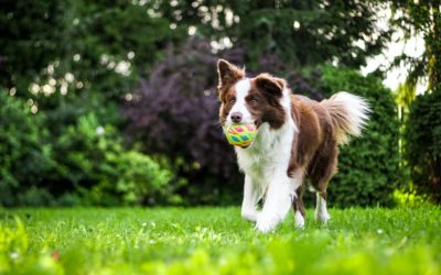 What You Should Know About Pet Allergies This Spring