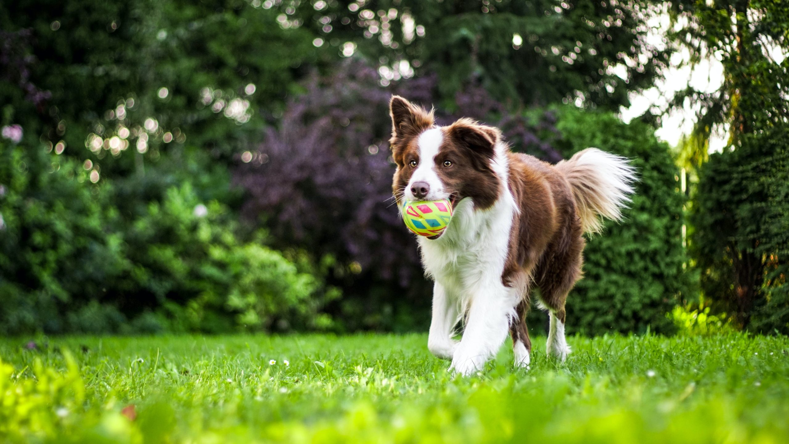 managing your pets allergies