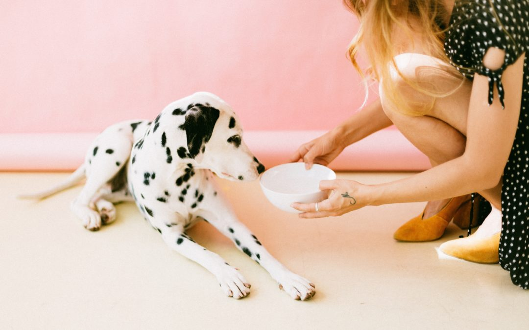 Feeding Your Dog: What You Need To Know
