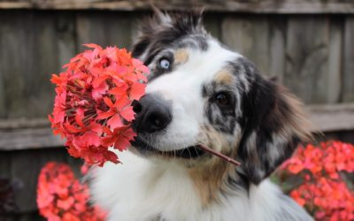 Common Indoor Toxic Plants for Pets to Avoid