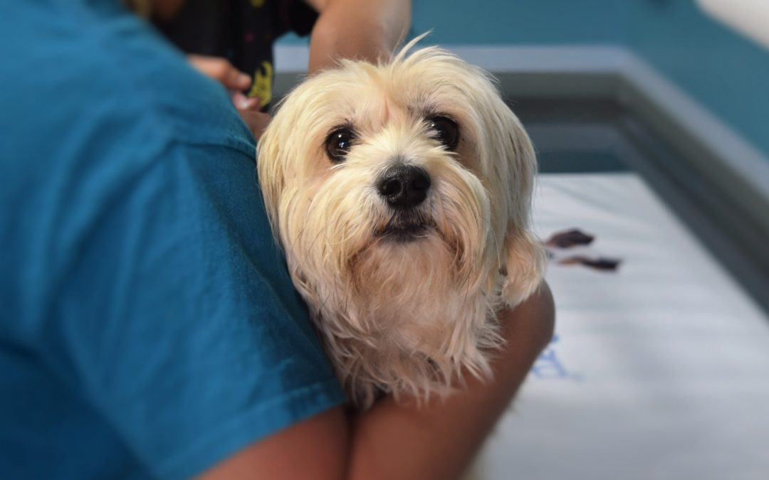 4 Pet Tips Your Veterinarian Wishes You Knew