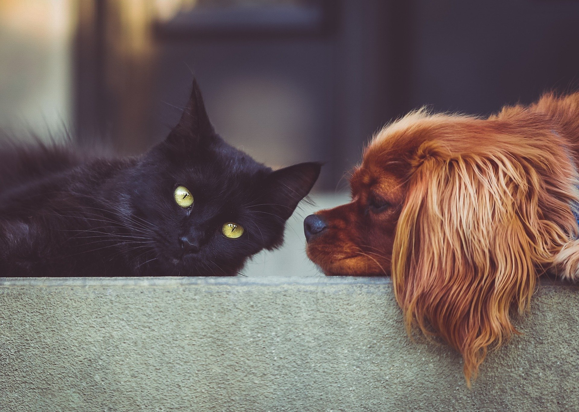 a black cat leaning next to a brown dog