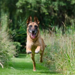 Tips to Maintain Your Dog's Weight This Summer