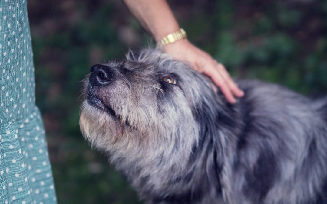 How To Greet a New Dog You Don't Know