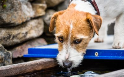 How to Tell If Your Pet Is Dehydrated